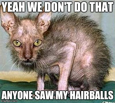 YEAH WE DON'T DO THAT ANYONE SAW MY HAIRBALLS | made w/ Imgflip meme maker