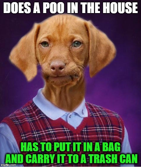 DOES A POO IN THE HOUSE HAS TO PUT IT IN A BAG AND CARRY IT TO A TRASH CAN | made w/ Imgflip meme maker