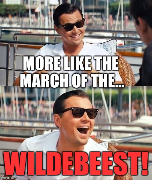 Dicaprio | MORE LIKE THE MARCH OF THE... WILDEBEEST! | image tagged in dicaprio | made w/ Imgflip meme maker