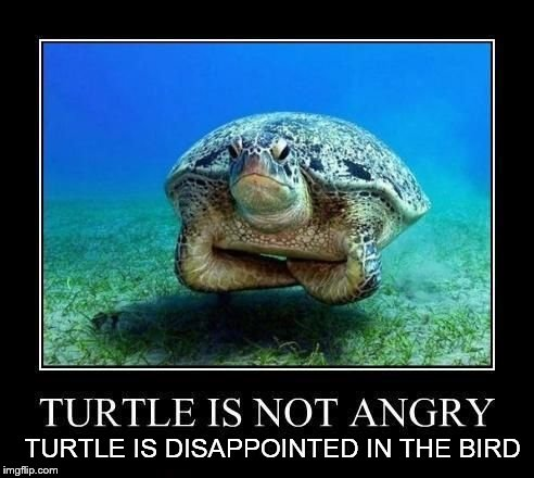 IIIIIIIIIIIIIIIIIIIIIIIIIIIII TURTLE IS DISAPPOINTED IN THE BIRD | made w/ Imgflip meme maker