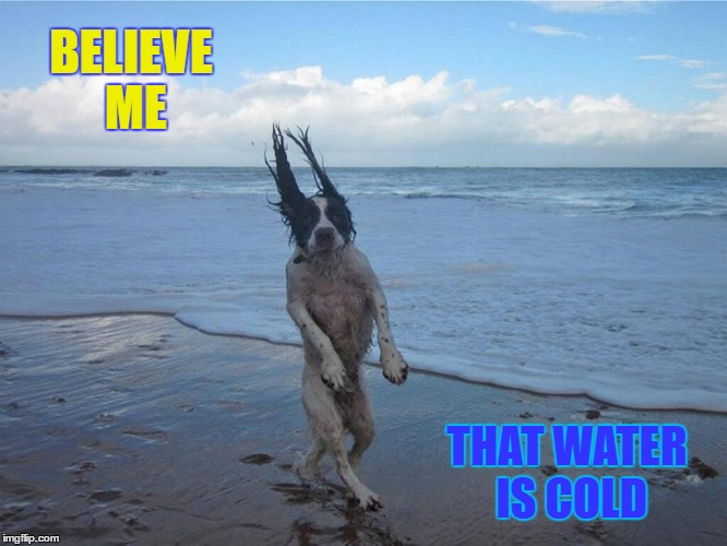 Cold Water | BELIEVE ME THAT WATER IS COLD | image tagged in funny memes,wmp,funny dog,cold | made w/ Imgflip meme maker