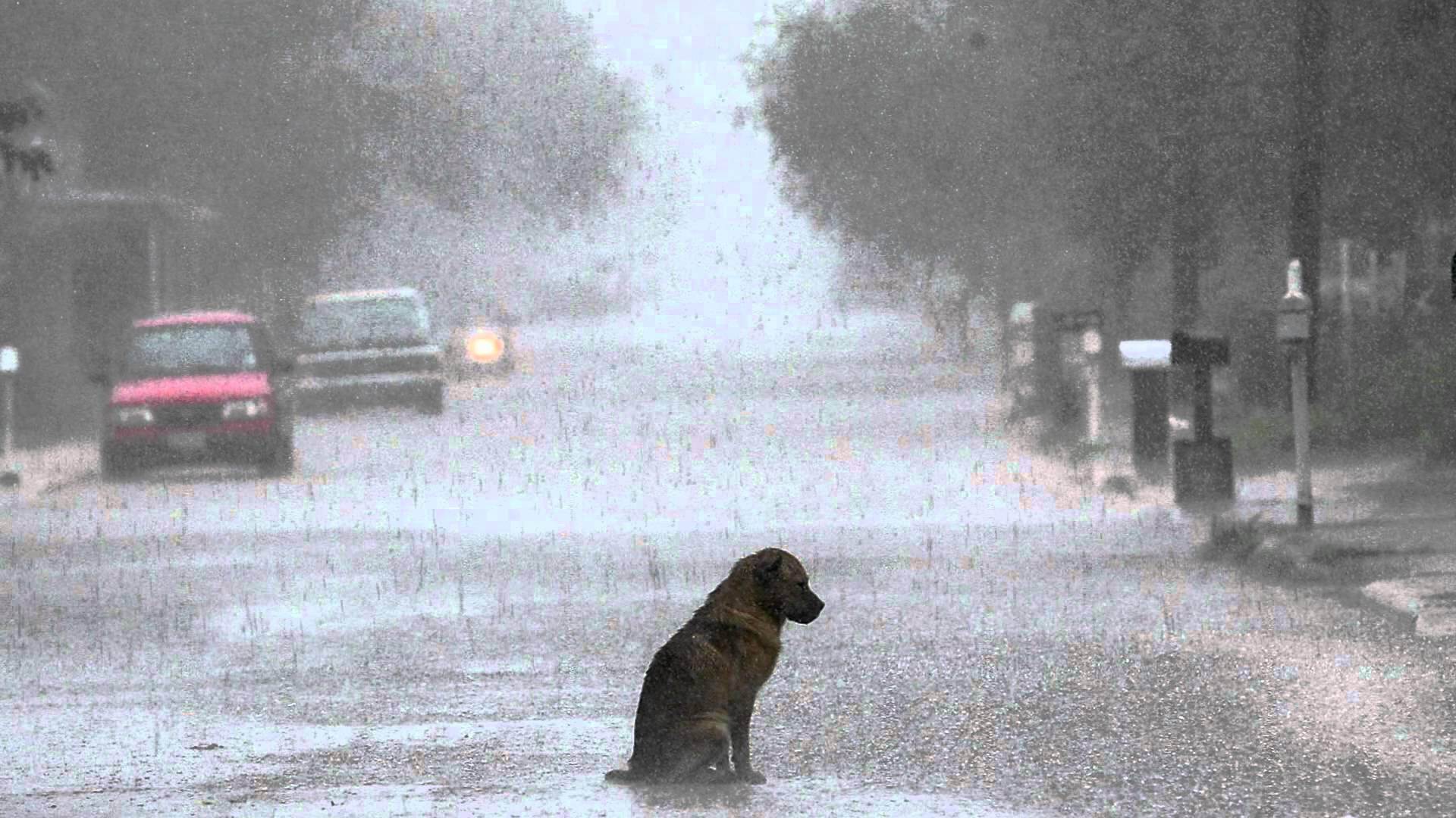 Very Sad Dog Blank Template - Imgflip