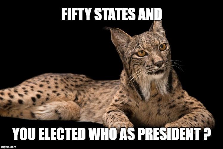 1i5r2r liberal lynx imgflip