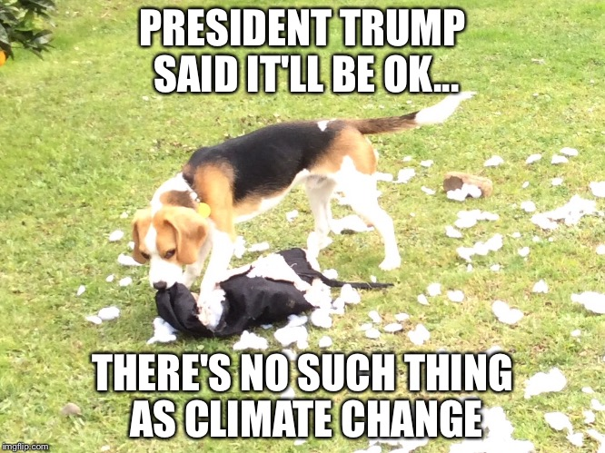 PRESIDENT TRUMP SAID IT'LL BE OK... THERE'S NO SUCH THING AS CLIMATE CHANGE | image tagged in trump,beagle,climate change,funny,pillow,meme | made w/ Imgflip meme maker