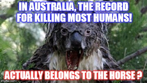 Angry Koala Meme | IN AUSTRALIA, THE RECORD FOR KILLING MOST HUMANS! ACTUALLY BELONGS TO THE HORSE ? | image tagged in memes,angry koala | made w/ Imgflip meme maker