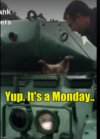 Yup. It's a Monday.. | image tagged in pet humor,weekdays | made w/ Imgflip meme maker