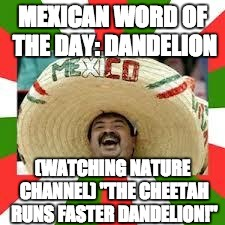 "Andale! | MEXICAN WORD OF THE DAY: DANDELION (WATCHING NATURE CHANNEL) ""THE CHEETAH RUNS FASTER DANDELION!"" 