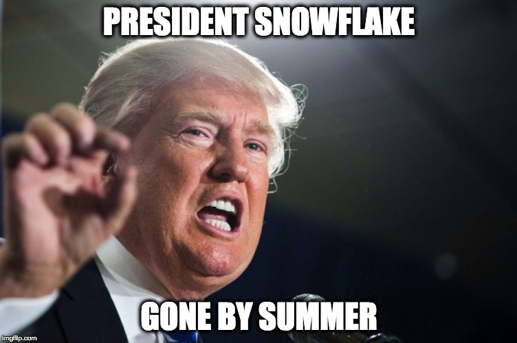 donald trump | PRESIDENT SNOWFLAKE GONE BY SUMMER | image tagged in donald trump | made w/ Imgflip meme maker