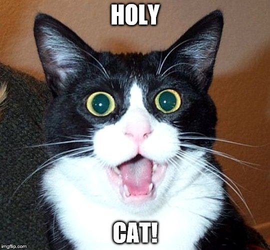 HOLY CAT! | made w/ Imgflip meme maker