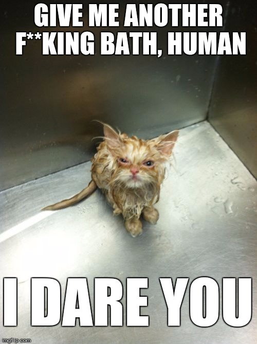 Cat meme. | GIVE ME ANOTHER F**KING BATH, HUMAN I DARE YOU | image tagged in memes,kill you cat | made w/ Imgflip meme maker