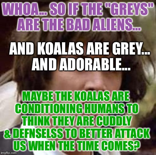 "Conspiracy Keanu Meme | WHOA... SO IF THE ""GREYS"" ARE THE BAD ALIENS... MAYBE THE KOALAS ARE CONDITIONING HUMANS TO THINK THEY ARE CUDDLY & DEFNSELSS TO BETTER ATTA 
