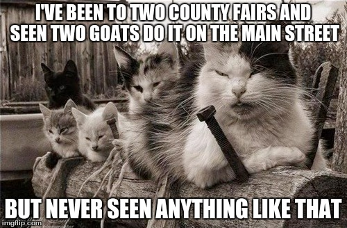 I'VE BEEN TO TWO COUNTY FAIRS AND SEEN TWO GOATS DO IT ON THE MAIN STREET BUT NEVER SEEN ANYTHING LIKE THAT | made w/ Imgflip meme maker
