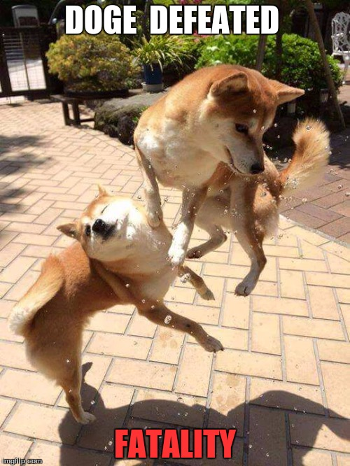 Dogefighter! | DOGE  DEFEATED FATALITY | image tagged in dog fight | made w/ Imgflip meme maker