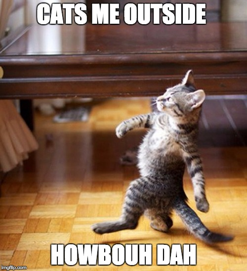 Cat Walking Like A Boss | CATS ME OUTSIDE HOWBOUH DAH | image tagged in cat walking like a boss,memes,funny,funny memes,cats | made w/ Imgflip meme maker