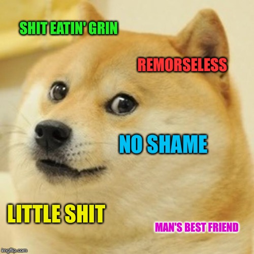 Doge Meme | SHIT EATIN' GRIN REMORSELESS NO SHAME LITTLE SHIT MAN'S BEST FRIEND | image tagged in memes,doge | made w/ Imgflip meme maker