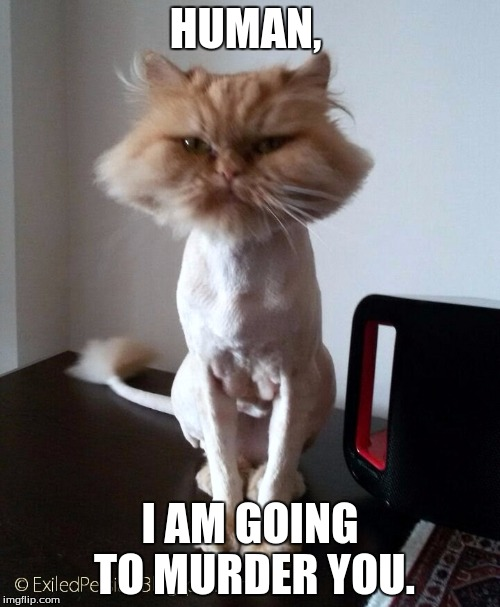 shaved pussy cat