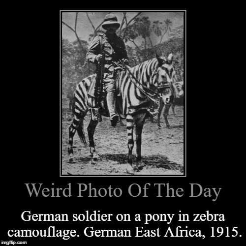 World War I Had A Lot Of Weird Ideas I Tell You... | Weird Photo Of The Day | German soldier on a pony in zebra camouflage. German East Africa, 1915. | image tagged in funny,demotivationals,weird,photo of the day,wwi,zebra | made w/ Imgflip demotivational maker