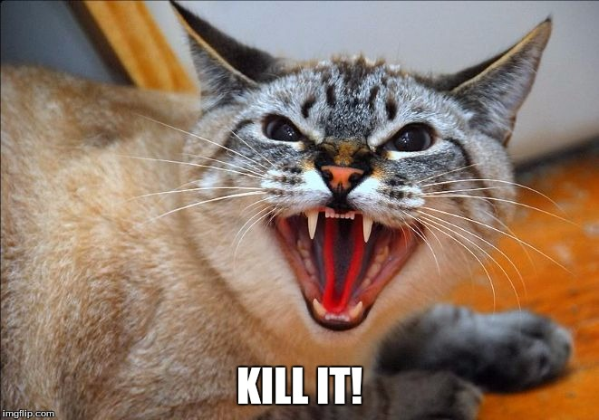 Pissed off cat | KILL IT! | image tagged in pissed off cat | made w/ Imgflip meme maker