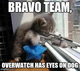 BRAVO TEAM, OVERWATCH HAS EYES ON DOG | image tagged in cat sniper | made w/ Imgflip meme maker