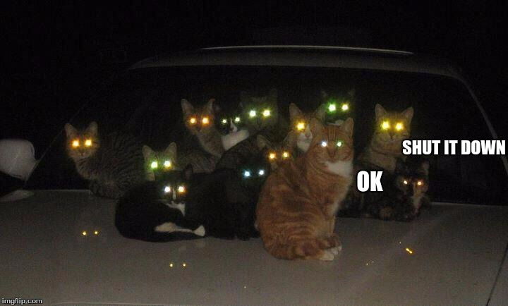 SHUT IT DOWN OK | image tagged in cats on car | made w/ Imgflip meme maker