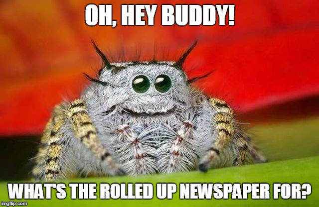 What if that spider thought you guys were room mates? | OH, HEY BUDDY! WHAT'S THE ROLLED UP NEWSPAPER FOR? | image tagged in spider | made w/ Imgflip meme maker