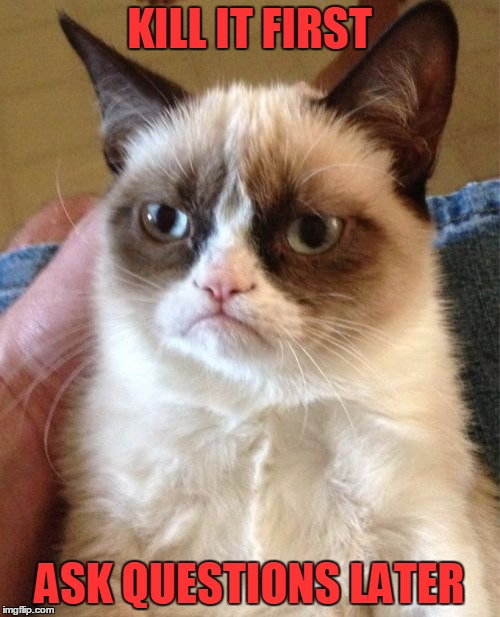 Grumpy Cat Meme | KILL IT FIRST ASK QUESTIONS LATER | image tagged in memes,grumpy cat | made w/ Imgflip meme maker