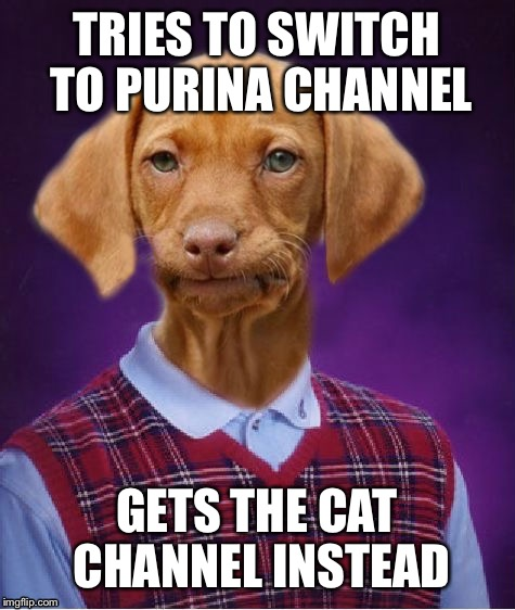 TRIES TO SWITCH TO PURINA CHANNEL GETS THE CAT CHANNEL INSTEAD | made w/ Imgflip meme maker