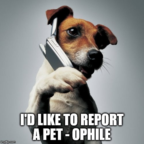 Dog Phone | I'D LIKE TO REPORT A PET - OPHILE | image tagged in dog phone | made w/ Imgflip meme maker