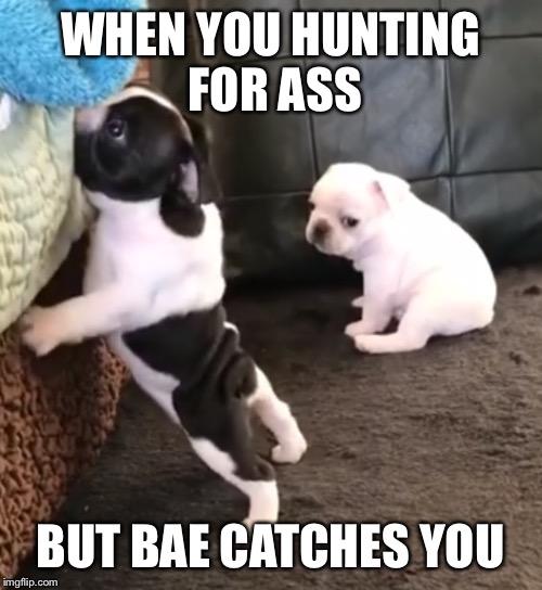 1ifptv dog memes imgflip,Doghouse Meme