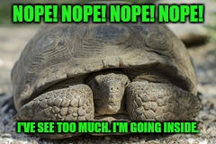 NOPE! NOPE! NOPE! NOPE! I'VE SEE TOO MUCH. I'M GOING INSIDE. | made w/ Imgflip meme maker
