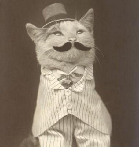 original business cat meme generator imgflip