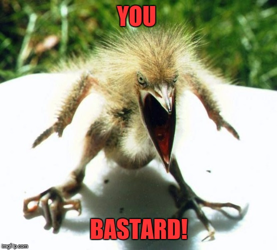 Angry bird | YOU BASTARD! | image tagged in angry bird | made w/ Imgflip meme maker