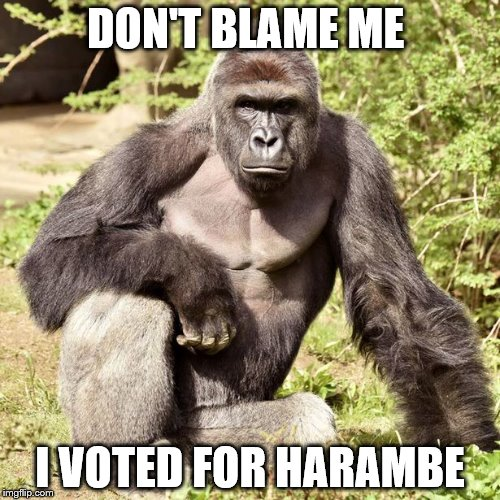 vote harambe |  DON'T BLAME ME; I VOTED FOR HARAMBE | image tagged in humor | made w/ Imgflip meme maker