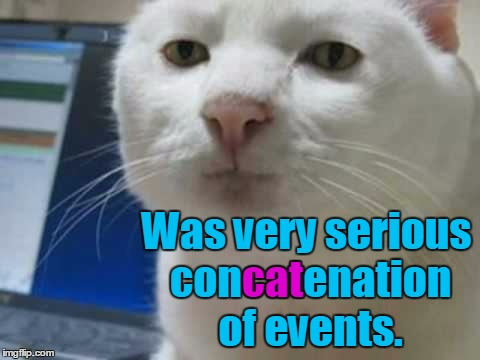 Was very serious concatenation of events. cat | made w/ Imgflip meme maker