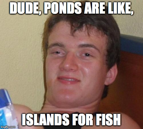 Fish islands... | DUDE, PONDS ARE LIKE, ISLANDS FOR FISH | image tagged in memes,10 guy,fish,islands,ponds,high | made w/ Imgflip meme maker