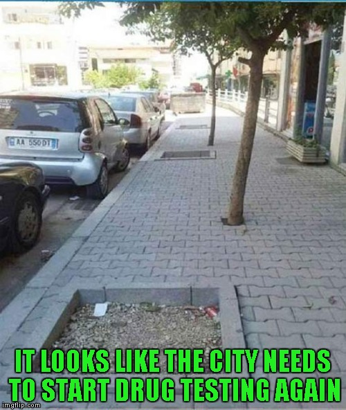 You had one job city worker... | IT LOOKS LIKE THE CITY NEEDS TO START DRUG TESTING AGAIN | image tagged in trees planted wrong,memes,you had one job,funny,city workers,ooops | made w/ Imgflip meme maker