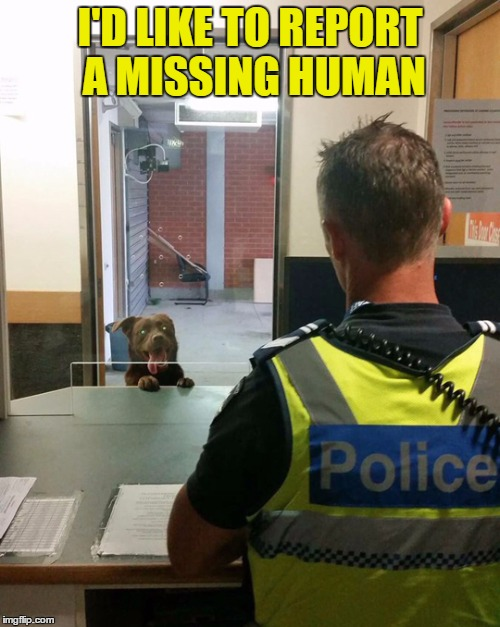 Raydog Loses His Master | I'D LIKE TO REPORT A MISSING HUMAN | image tagged in raydog,missing | made w/ Imgflip meme maker