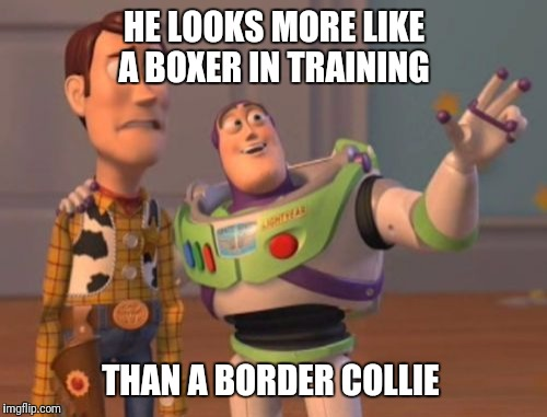 X, X Everywhere Meme | HE LOOKS MORE LIKE A BOXER IN TRAINING THAN A BORDER COLLIE | image tagged in memes,x,x everywhere,x x everywhere | made w/ Imgflip meme maker
