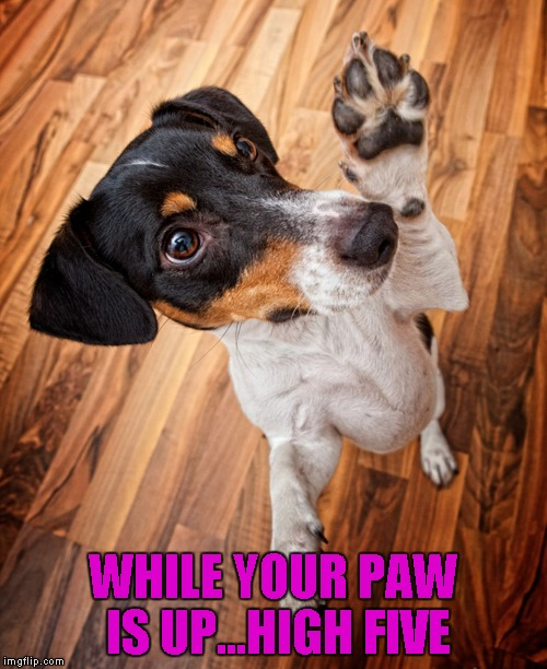 WHILE YOUR PAW IS UP...HIGH FIVE | made w/ Imgflip meme maker