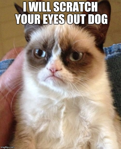 Grumpy Cat Meme | I WILL SCRATCH YOUR EYES OUT DOG | image tagged in memes,grumpy cat | made w/ Imgflip meme maker