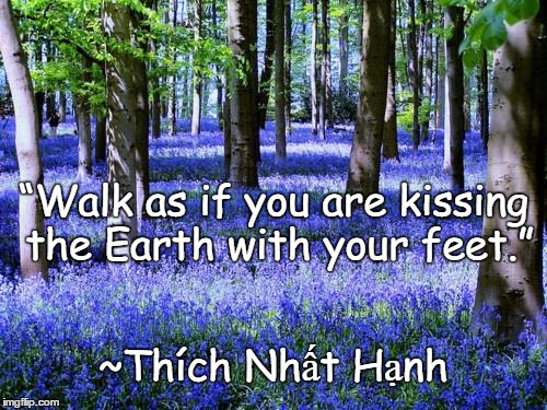 "Purple Flowers | ""Walk as if you are kissing the Earth with your feet."" ~Thích Nhất Hạnh 