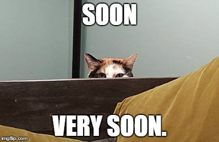 SOON VERY SOON. | image tagged in cat meme | made w/ Imgflip meme maker
