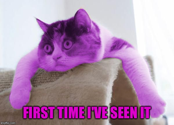 RayCat Stare | FIRST TIME I'VE SEEN IT | image tagged in raycat stare | made w/ Imgflip meme maker
