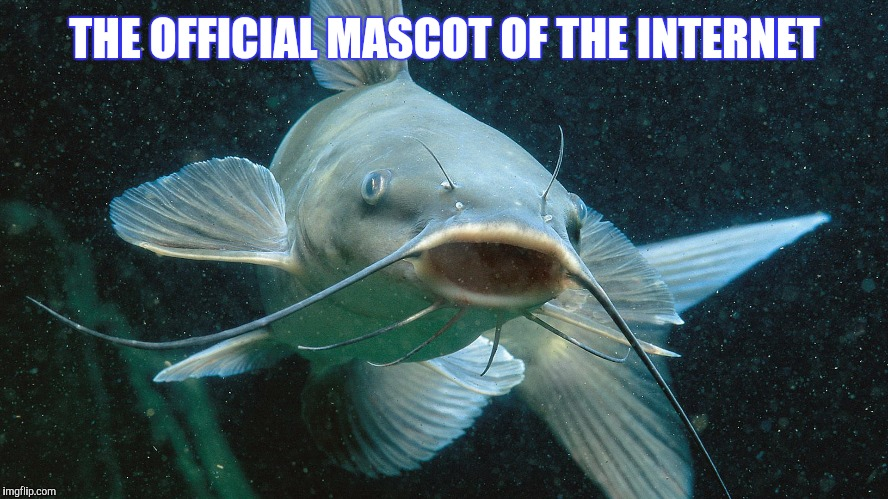 THE OFFICIAL MASCOT OF THE INTERNET | image tagged in memes,catfish,trust no one | made w/ Imgflip meme maker