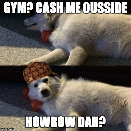 Dogs who don't lift | GYM? CASH ME OUSSIDE HOWBOW DAH? | image tagged in gym,do you even lift,funny dog memes,cash me ousside how bow dah | made w/ Imgflip meme maker