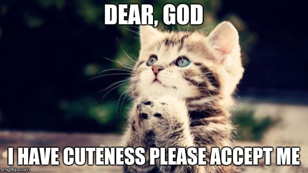 Cute kitten | DEAR, GOD I HAVE CUTENESS PLEASE ACCEPT ME | image tagged in cute kitten | made w/ Imgflip meme maker