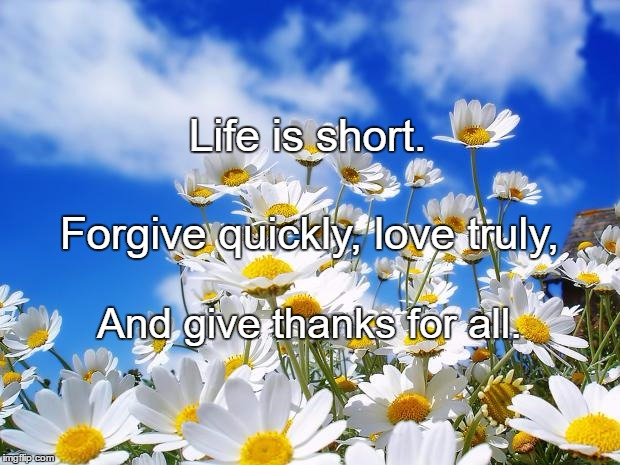 spring daisy flowers | Life is short. And give thanks for all. Forgive quickly, love truly, | image tagged in spring daisy flowers | made w/ Imgflip meme maker