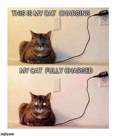 Meow...? | THIS IS MY CAT  CHARGING MY CAT  FULLY CHARGED | image tagged in cats,charger,funny memes,funny,pics | made w/ Imgflip meme maker