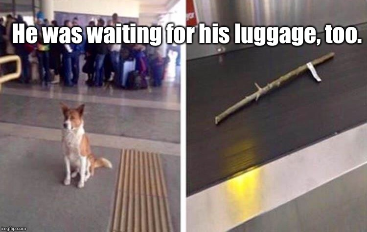 A Dog's Gotta Do, What A... | He was waiting for his luggage, too. | image tagged in memes,animals,dogs,funny | made w/ Imgflip meme maker