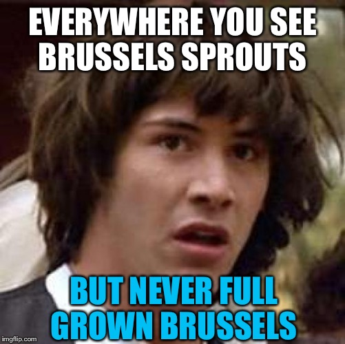 Conspiracy Keanu Meme | EVERYWHERE YOU SEE BRUSSELS SPROUTS BUT NEVER FULL GROWN BRUSSELS | image tagged in memes,conspiracy keanu | made w/ Imgflip meme maker